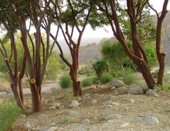 Desert_Forest